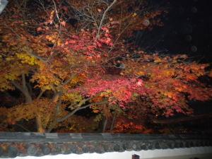 京都高台寺の紅葉①.jpg